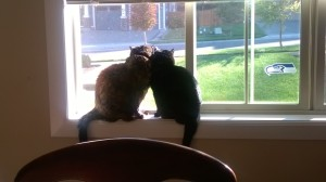 Suzie Q and Penelope bird watching